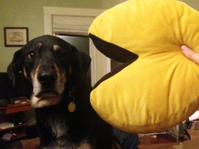 rstevens:  Dublin J. Dog is unsure about Pac-Man.