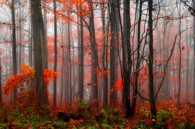 woodendreams:  (by anj_p)