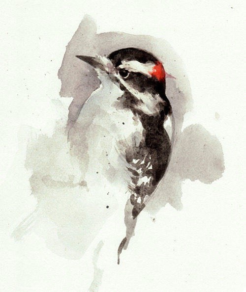 etsypix:  Woodpecker watercolor painting print by studiotuesday