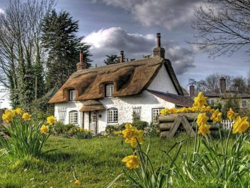 the daffodils that watched the cottage