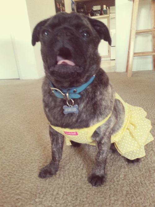 kirstenfullofsound:  Then there's this one. We put her in a dress and this is what happened.