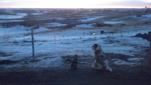 Watching the sunrise together-the puppy and the old one…