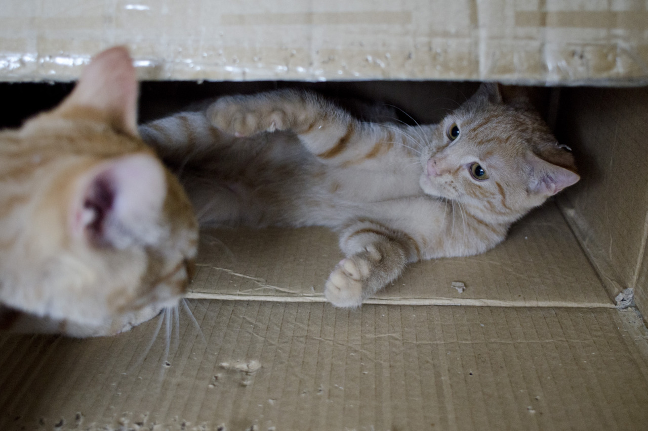 Mick is not thrilled about Clementine taking over the box