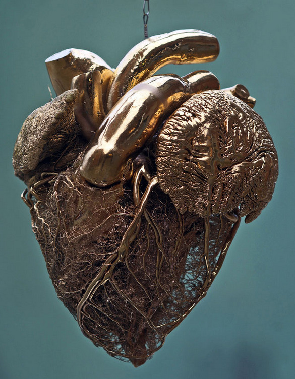 A blood vessel configuration of a bull's heart covered with fake gold.