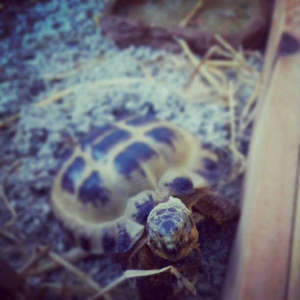 Someones Food Bowl Is Empty! #Hungry #Tortoise #Pet #Demanding #Food #Bowl #Empty #Levi