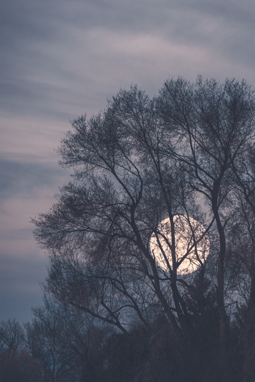 Mmmmhm, that pastel grey-lavender sky and those treefingers and that moon….