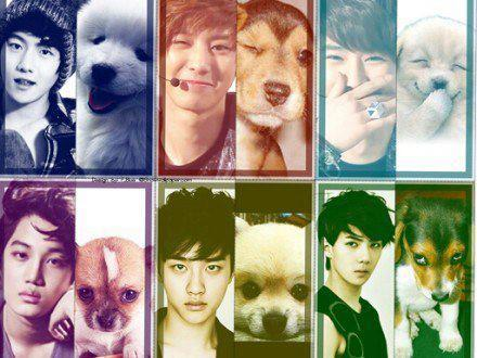 Can you still remember this guys??? Cute dogs!!! :D