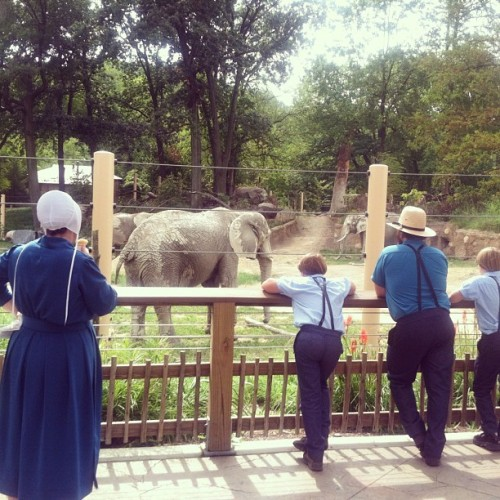 There were hundreds of Mennonites at the zoo today. Went for a picture of an elephant with the intent to crop this but I thought this was elegant. FYI it is ok to photograph this level of less conservative Mennonites, just not the Amish.