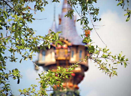 disneyloveandmemories:  Rapunzel's Tower