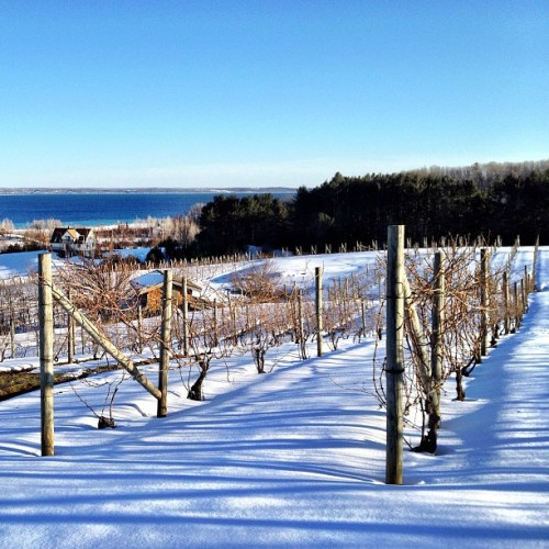 Winter slowly turns to spring in the vineyards at Willow in #Leelanau County. #TCMI