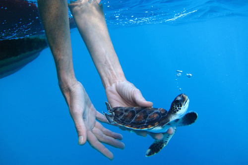 water turtle tumblr - Buscar con Google on We Heart It - http://weheartit.com/entry/59765435/via/aritafn   Hearted from: http://www.tumblr.com/tagged/sea%2520turtles
