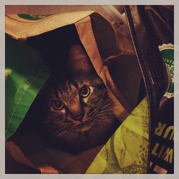#catinabag (at Little Burrow of Love)