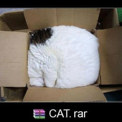 9gag:  Cat.rar