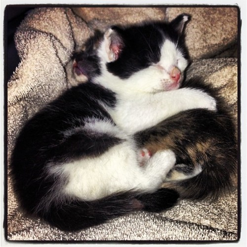 sleepy heads! #kittens  (at Capistrano)