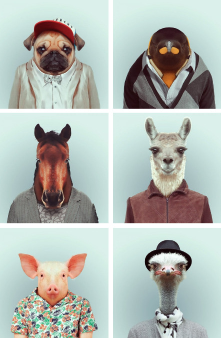 "collegehumor:  18 Zoo Animals that Went in for Portraits [Click for more] Mugshots from the Bronx Zoo Breakout"" of 94"