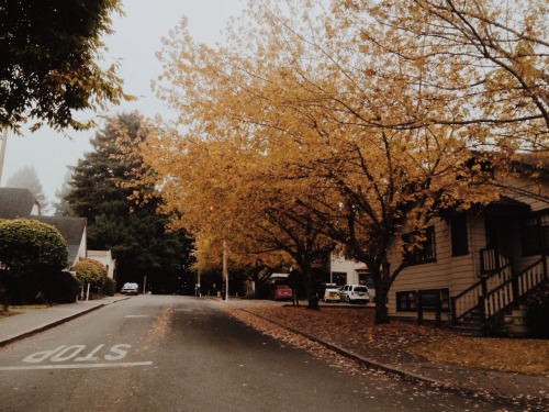 givemeneweyes:  Foggy Autumn Day