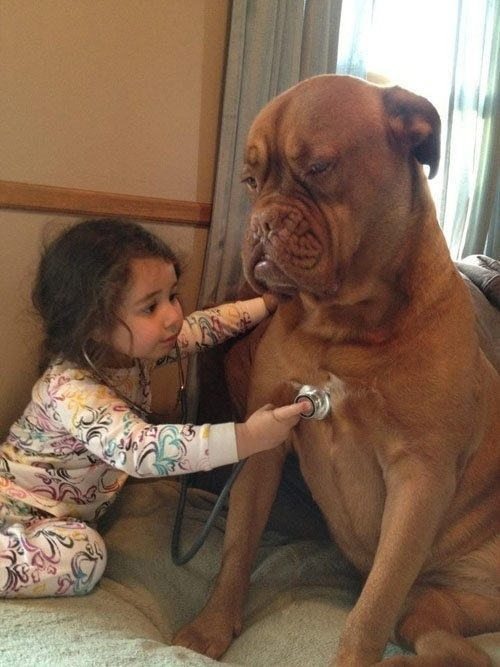 I am this dog my tummy hurts where is my baby doc chikazoe:  azuYgOapCAw.jpg