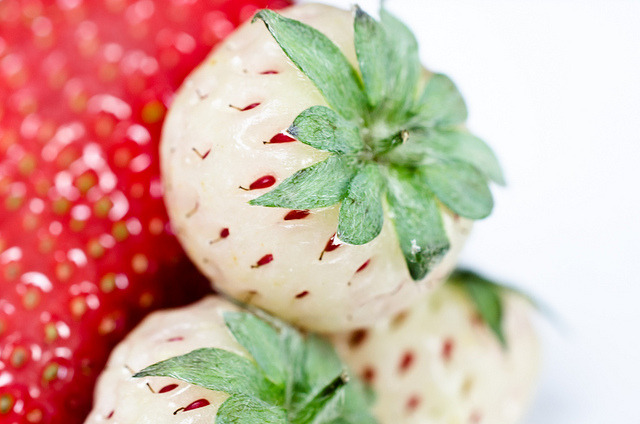 ilikeasianfood:  Pineberries by Michael.Camilleri on Flickr.