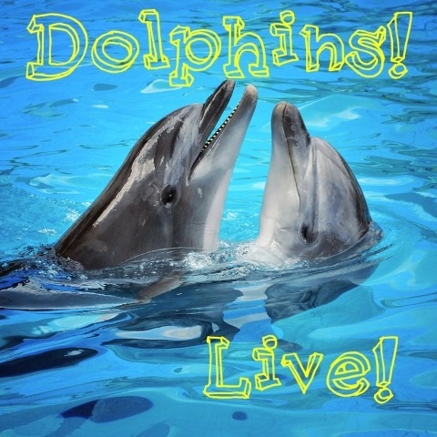 DOLPHIN CAM LIVE FEATURING WINTER (STAR OF DOLPHIN TALE)by HelloGiggles Team http://bit.ly/11iNoqj
