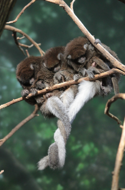 Monkey Trio Snuggle!