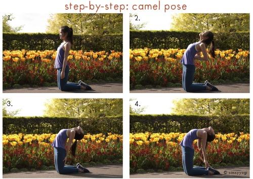 sassyyogi:  Camel Pose (Ustrasana) *before you start, you might want to get your mat, or a towel, to pad your knees and shins in case they hurt from jabbing against the ground!* 1. Start off by kneeling on the ground, with your knees hip width (or two fists) apart. Firm up your butt, and draw in your sitting bones. Lengthen your spine.  2. Start bending backwards, pressing your palms against your lower back for some support. Be careful not to collapse into your lower back. Shine your heart to the sky and keep your chest lifted. Engage your thigh muscles so that your hips stay aligned with your knees. Stay in this position for about 5 to 10 breaths. If this position feels intense for your back, stay here. 3. If your back feels pretty good, deepen your bend by straightening your hands, moving it closer to the back of your knees. Continue to keep your chest lifted, do not collapse into your lower back as you risk injuring your back that way. Drop your head back and continue to keep your breath flowing. Stay in this pose for 5 to 10 breaths. If this pose feels intense for you, stay in this pose.  4. To go into a full camel pose, reach your hands towards your ankles and hold on to your ankles. A few important things to note: Do not collapse into your lower back, continue to keep your chest lifted. Keep your breath flowing Make sure that your hips is stacked on top of your knees. This is important! Stay here for 10 - 15 breaths, making sure that you keep breathing and do not hold your breath! Remember (Caution): Listen to your body. This is an intense back bend, so if your back feels stiff, do not force the pose. You wouldn't want to risk injuring your back!  Keep breathing. Because this is an intense back bend, you may feel nauseous in between the pose. Just keep breathing, and the nausea will pass. If you don't feel good, ease out of the pose. Always listen to your body!!  Move into the backbend slowly. Do not rush into it as that might strain your back as well!  Also be careful not to strain your neck! Modifications: If you are unable to reach for your heels, try to turn your toes under and elevate your heels. You can also opt to have some blocks beside you to hold on to. Benefits: Strengthens back muscle Improves posture Stretches the entire front of the body Opens up the hips and chest Loosens up the vertebrae
