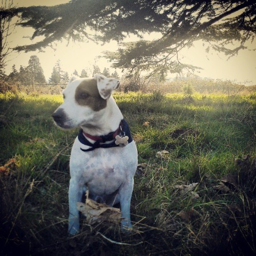 #thelocalhound (at Discovery Park)
