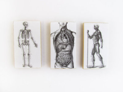 """Vintage Anatomical Images"" Magnet Set by WalterSilva"
