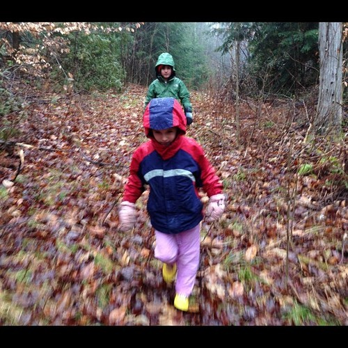 Little walk in the woods on a raw day. 35° & light rain.