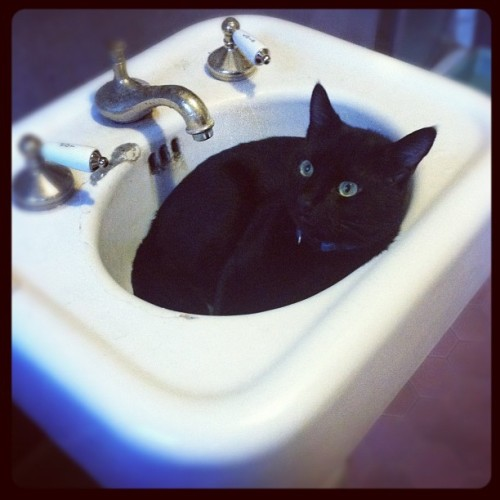 Cat in a sink.