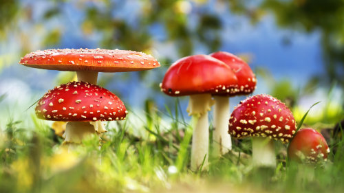 Fungus is the Internet of the plant world  New research finds that plants regularly communicate through a vast, underground network.