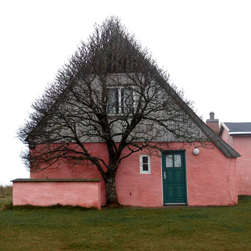 A tree took the shape of a house to shelter itself from wind.