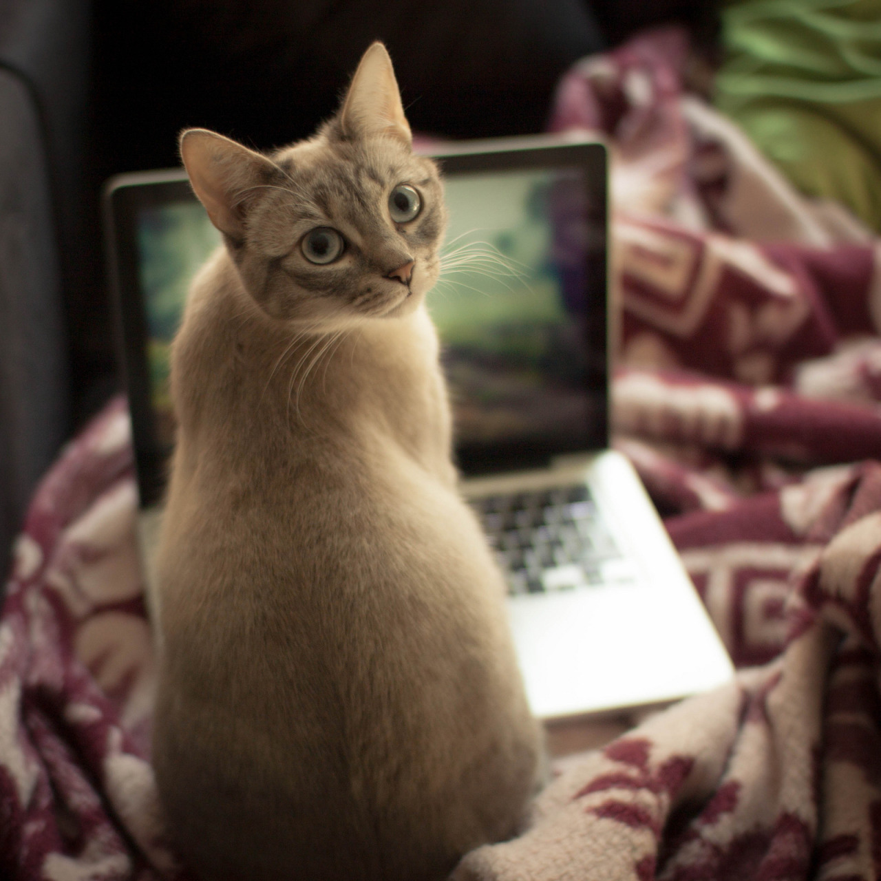 "thefluffingtonpost:  Kitten Puts Finishing Touches on Memoir Though Evie the cat is only two years old, she's already experienced a lot. There was the time the can opener broke, there was the incident with the toad that got into the basement, there was her harrowing run-in with the vacuum — just to name a few. That's why Evie has decided to put it all down on paper. ""She just finished off the first draft last night,"" confirmed Joel Turtledove, acquisitions editor at HarperCollins, which gave the kitten a $250,000 advance — unheard of for a memoir of a relatively obscure figure. ""We think she'll play well in the growing 'stuff about pets' market,"" said Turtledove, citing the recent mega-successes of Boo, Grumpy Cat and Lil Bub.  The manuscript will now go into editing, and HarperCollins expects to release the book this fall. Via Enthuan. This post was originally published on HelloGiggles."