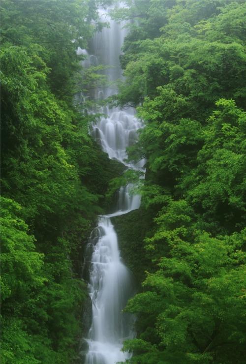 ponderation:  the season of new green leaves by makoto isa