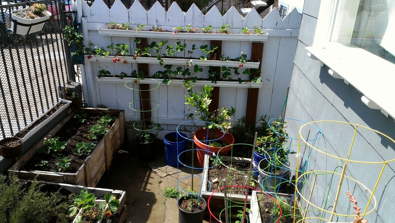 Finally got tomato cages. I like these colorful ones a lot. I also moved boxes around a little to make more room for the SEVEN tomato plants.