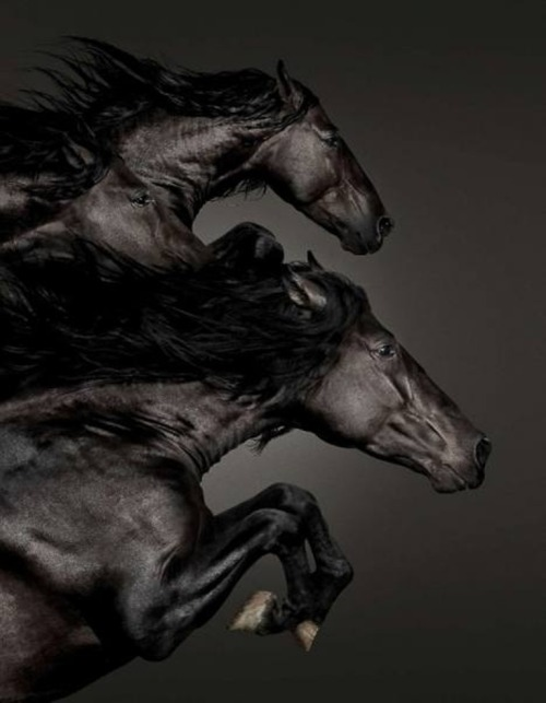 reginasworld:  Horses ©  Garrigosa