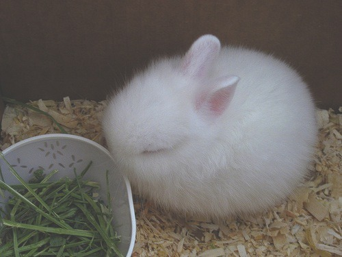bunnysob:  can you be mine (;__;)