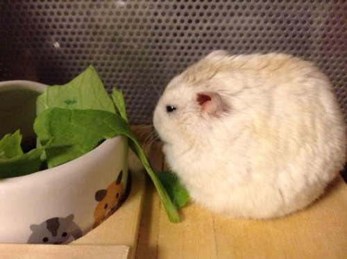epic-humor:  see more  I want a fat hamster