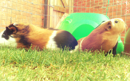 """What a couple o' sweeties!""My little cuties, Dotty and Momo <3"