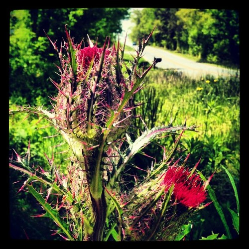 Giant awesome weed #onmyrun  today. Also found a cool skeleton & saw an albino squirrel. It's a good day.