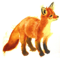 baby fox. watercolors/multimedia. brendan garbee