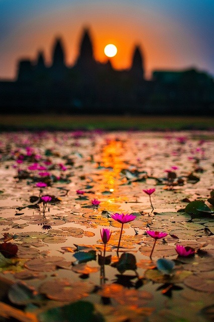 sunflowersandsearchinghearts:  Sunrise in lotus flowers bloom / Angkor Wat, Siem Reap, Cambodia