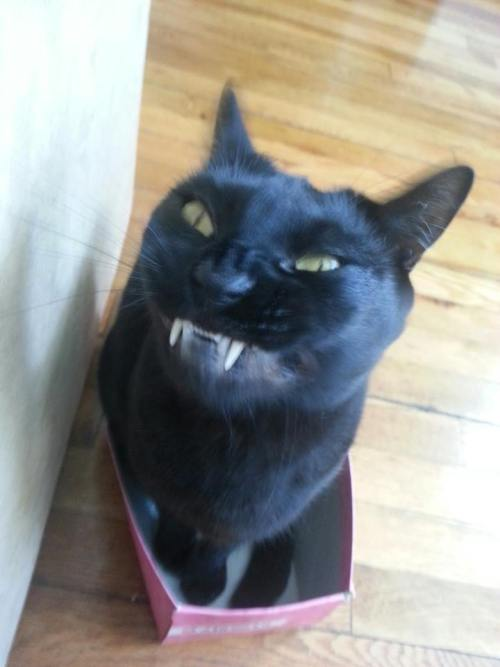 cute-overload:  …and then I showed them my teeth, like this.http://cute-overload.tumblr.com
