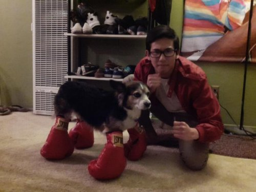 Dog Has Boxing Gloves Feet And in this corner, weighing in at fifty pounds, Woofy Balboa.