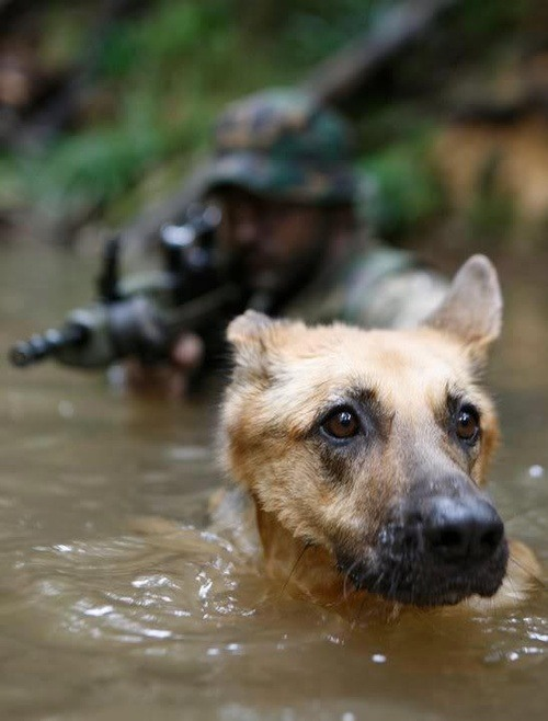 """When Bluedog served as a Navy SEAL."" I have seen stuff…stuff and things"