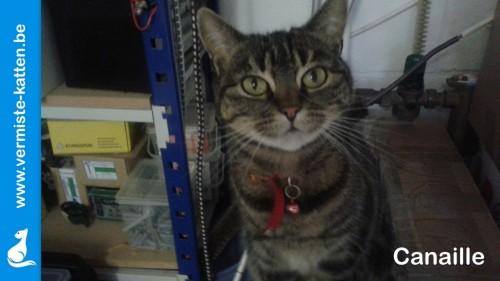 Vermiste katten limburg