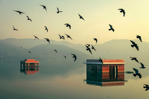 storyhearts-journey:  Mystic Morning, Jal Mahal, Jaipur India photographer:Mahesh Balasubramanian
