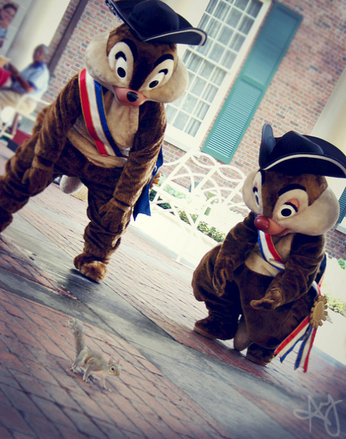 everythingisdisney:  chip and dale by amy catherine on Flickr.  I'D KNOW THAT BRICK FACADE AND CRAPPY COBBLESTONE GROUND COVER ANYWHERE