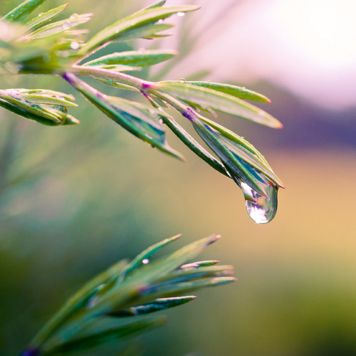 Rain Macro by ►CubaGallery on Flickr.