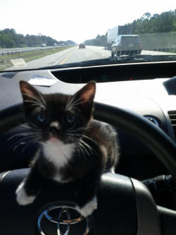 And you thought cat's eyes were a road safety feature. Definitely NOT an advisable way to travel. We can only hope the kitten and driver made it home okay.