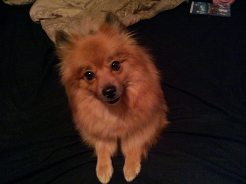 we rescued this adorable pomeranien. Her names Harley. very fun and obedient doggy. I'm blessed <3